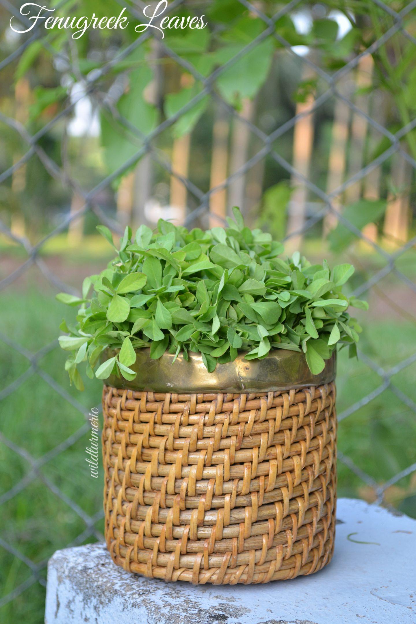 methi leaves uses