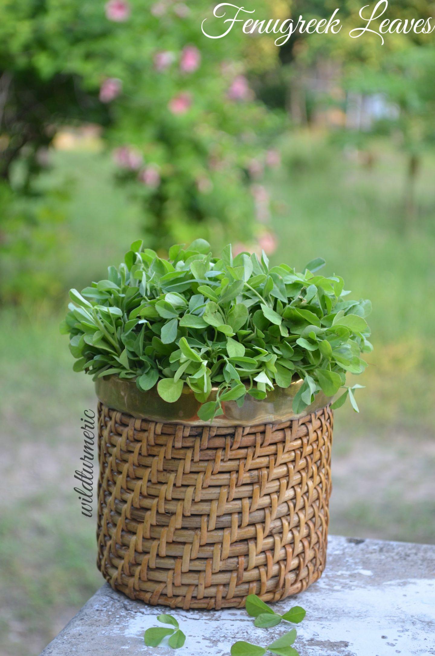 methi leaves benefits