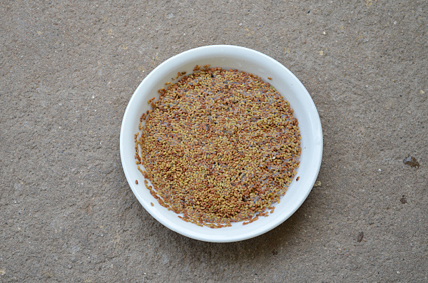 alfalfa seeds benefits