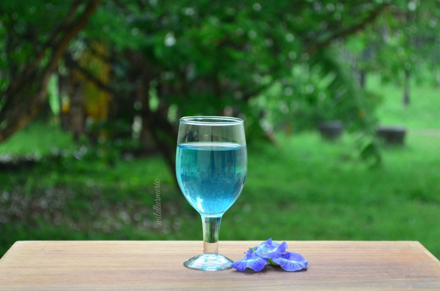 blue butterfly pea benefits for hair