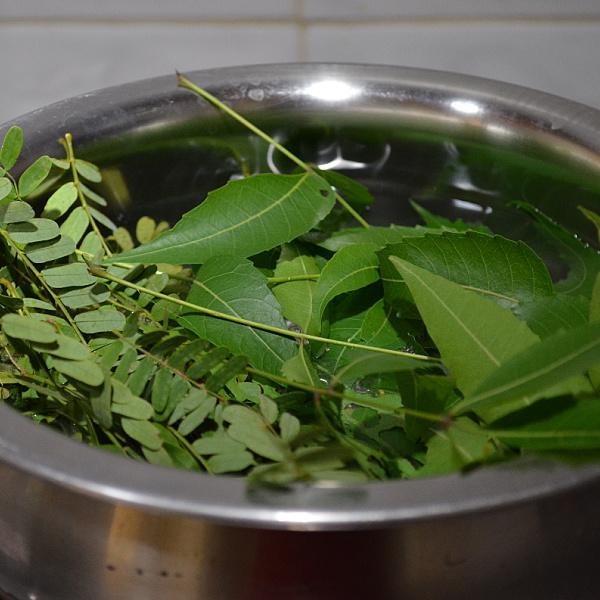 neem for skin diseases