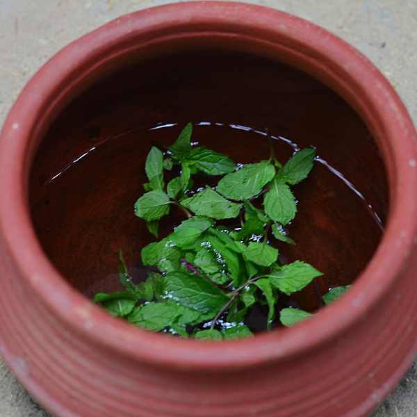 mint (pudina) benefits
