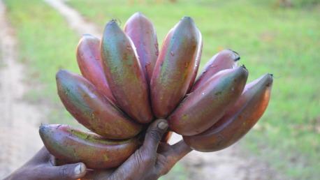 banana peel for wart removal
